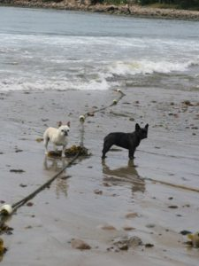 Sharkey and Francesca always love the beach - even when it's windy and cool.
