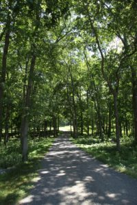 A carriage road leading into the woods