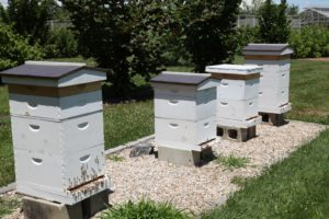 We've added a fourth bee hive and all looks good.