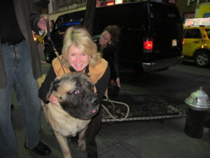 This is Norton, an English Mastiff - we made friends on my way into the Today show - what a great dog!!!!
