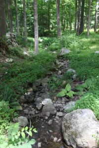 Another dried stream bed