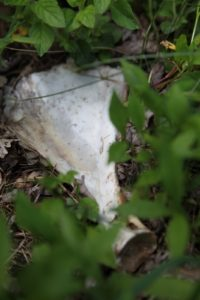 Hmmm...an animal bone.  Deer?  Coyote?