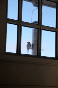 A view through one of the carport windows - a very happy little bird