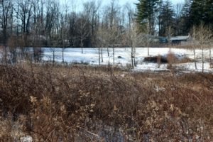 This scrubby area is the wetland that runs through my property.  It is full of wildlife.