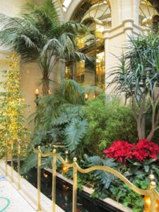 The Atrium is filled with lush tropical plants.