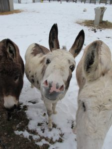 The donkeys also wanted to talk, and they were asking for carrots and apples and love.