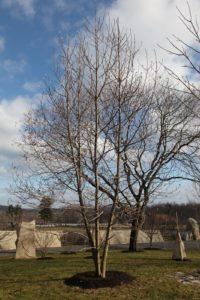 The magnolia grove has gotten so tall.
