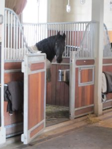 Martyn is free to walk around the stable while the exterior doors are closed.