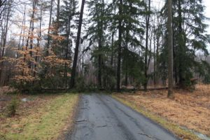 The wind was so fierce that it toppled a tall pine tree out in the woods.  It fell across one of the carriage roads.