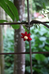 There is a lot of metal, metal wire, and fencing used in tropical gardens to support the vines and heavy foliage.