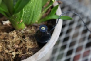 This is the light sensor in one of the orchid pots.