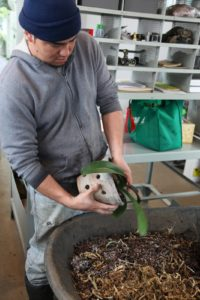 Wilmer is removing this orchid from its pot.