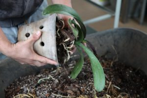 Orchid roots need a lot of air circulation and orchid pots should have air holes like this one.