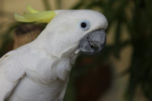 And a beautiful cockatoo