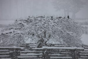 The snow was falling thickly and heavily.  I wonder what these crows were thinking?