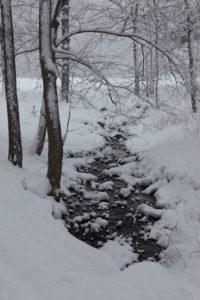 A woodland stream grugling through the snow