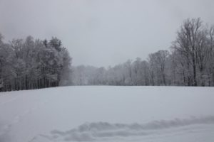 A shot of the middle field - and very beautiful.