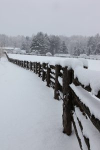 The paddock fencing always looks stunning with a snow coat.