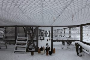 The wire roof over the chicken yard has been totally blanketed with snow.