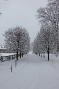 The often photographed allee of lindens