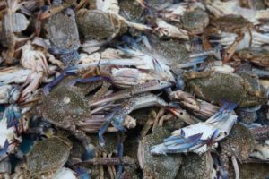 As I've already mentioned, crab dishes are very popular in Malaysia.  These are blue crabs at the market.