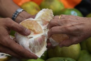 Pomelo, or Chinese grapefruit, is a very nutritious citrus fruit that I love.