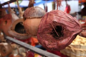 We loved these natural bird houses, made from coconuts.