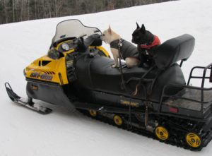 Francesca and Sharkey enjoy all sorts of transportation.  This was their first time out on a Ski-Doo.