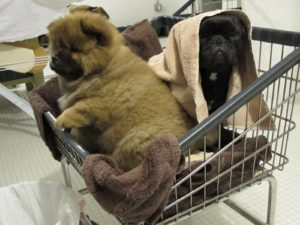 Sorry G.K. - you cannot leave the cart - not yet!