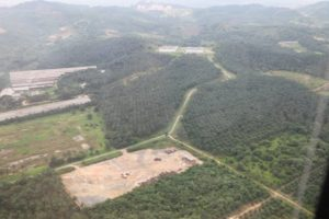 Flying over a palm plantation - palm oil, derived from the fruit of the palm tree, is a staple crop in Malaysia, both on the peninsula and Malaysian Borneo.