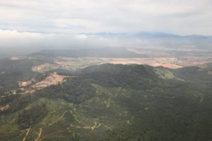 Palm farms surround hilltops of natural forest.