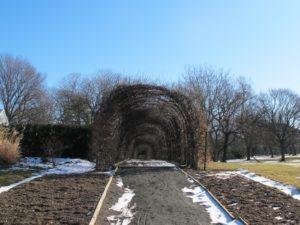 A European hornbeam allee arch - it is brown in winter but dense green in summer.