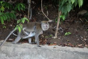 On our way back to the helicopter, we saw a group of monkeys, including this mother and baby.