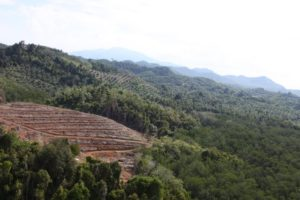 Here are palm oil plantations and cleared forest for future palms.  Fortunately, deforestation rules in Malaysian Borneo are being improved.