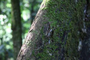 We saw so many beautiful varieties of moss.