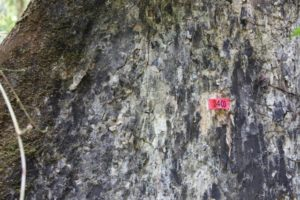 In the rainforest, trees, especially older ones, are numbered for research purposes.