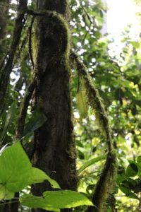 Can you picture Tarzan swinging on these vines?