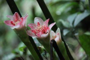 Lovely waxy flowers
