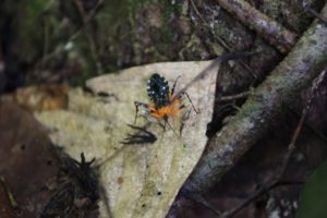 The rainforest is so dense and home to so many unusual insects.