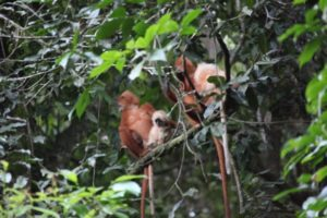 Here are two mothers with their babies. The babies turn red as they get older.