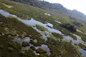 Very marshy, indeed!