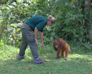 The volunteers form a very close bond with the young orang-utan.