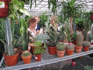 Angel Plants has a large inventory of cacti and succulents.  Andrea and I are taking notes for a future TV segment.