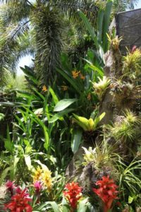 The lush gardens have many lovely, colorful bromeliads - their flowers are extraordinary.