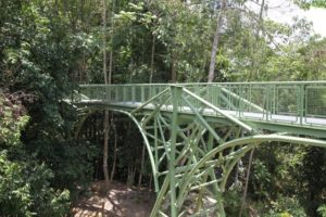 The Rainforest Discovery Centre recently completed construction of this beautiful canopy walk.