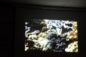 The depletion of the coral reefs has had a devastating effect on marine life.
