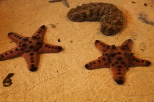 There are 2,000 living species of starfish that occur in all the world's oceans.