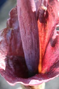 A look down inside the flower's throat