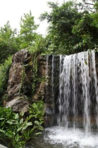 After departing Muthu's, we visited the Singapore Botanic Gardens.  This great waterfall is at the entrance.