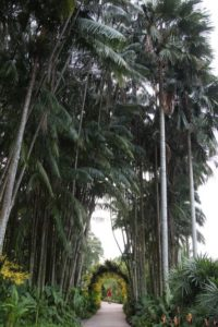 We walked through this impressive allee of tall palms.